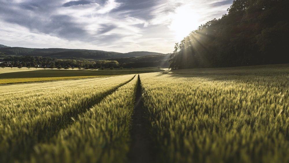 Rolnictwo-ustawa-o-obrocie-ziemia